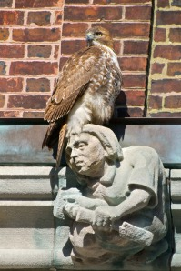 The Quad hawk on the gargoyle next door down